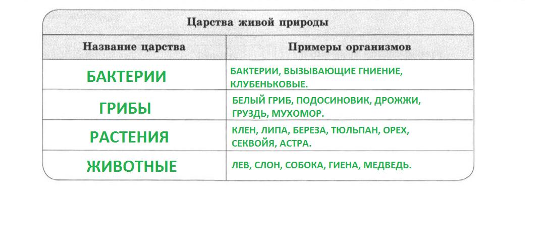 5_ЗАП_ЗЕЛ.png